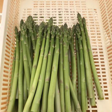 採れたて新鮮‼︎ 真冬のグリーンアスパラLサイズ1kg 約1kg 野菜(アスパラガス) 通販