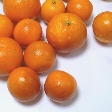 送料込 ブラッドオレンジ(タロッコ種) C品(訳あり) 3㎏ 農薬不使用 3kg(18~27個) キーワード: 訳あり 通販