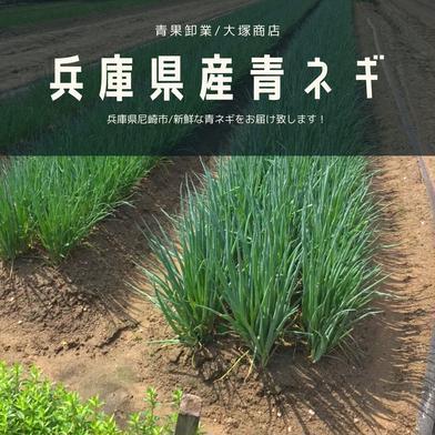 【お買い得】青ネギ5kg/兵庫県産 5kg 果物や野菜などの宅配食材通販産地直送アウル