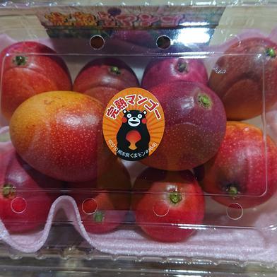 ミニマンゴー 400g×2パック 果物(マンゴー) 通販