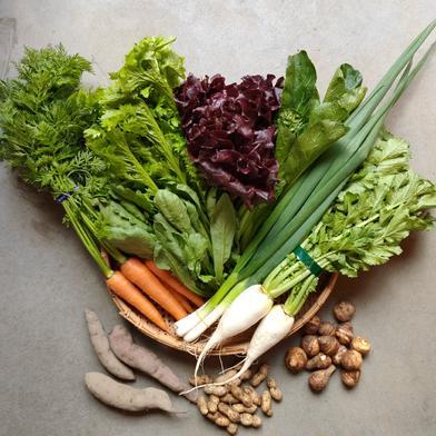 本物のオーガニック!有機野菜がたっぷり10品! 有機野菜10品 キーワード: JAS 通販
