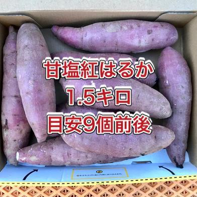 【鹿児島産】甘塩サツマイモ箱込み1.5キロ^_^ 箱込み1.5キロ(9個前後) 野菜(さつまいも) 通販