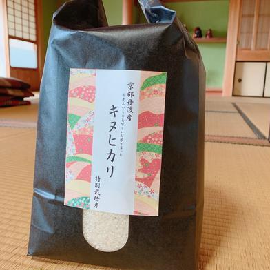 令和2年産京都丹波産 キヌヒカリ 10kg 10kg 京都府 通販