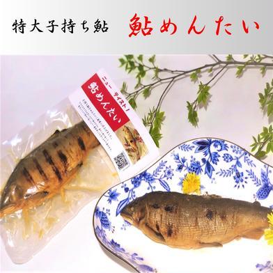 特大子持ち鮎 鮎めんたい 1パック(1尾入り) (有)美濃養魚場