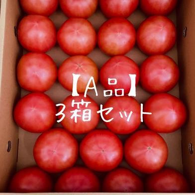 【A品】赤採りトマト3箱(4kg箱満杯×3) 約12kg(4kg箱満杯×3) くるるんトマトファーム龍農園