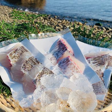 獅子島産真鯛(養殖)切り身 3パック 3パック(約270g) 魚介類(その他魚介) 通販