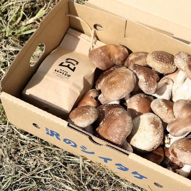「はじめまして!うちやま農園です」セット 南魚沼コシヒカリ3合(450g)/ちょいワル椎茸500g 食材ジャンル: 野菜 > セット・詰め合わせ 通販
