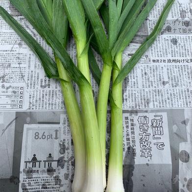 葉にんにく茄子セット 葉ニンニク10本、茄子6本 果物や野菜などの宅配食材通販産地直送アウル