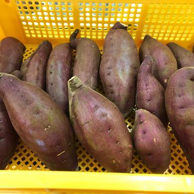 千葉県佐倉市産のさつまいも(シルクスイート) 5㎏ 野菜(さつまいも) 通販