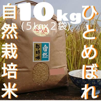 自然栽培 氷温熟成 ひとめぼれ R2年産 山形県産 庄内米 5分つき 10kg 10kg(5kg×2袋) 山形県 通販