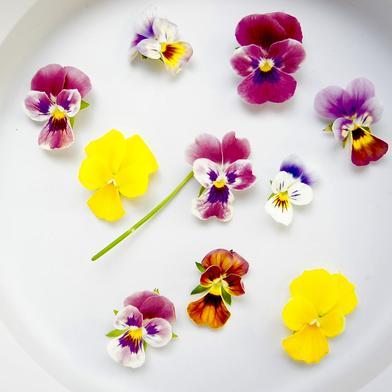 エディブルフラワー(食用花) ビオラ20輪 エディブルフラワー ビオラ20輪 その他 通販