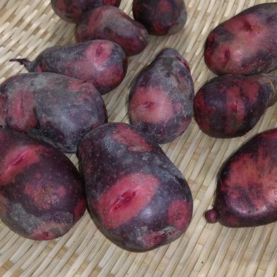 農薬不使用(無農薬)栽培 デストロイヤ 4.0kg   山口県 通販