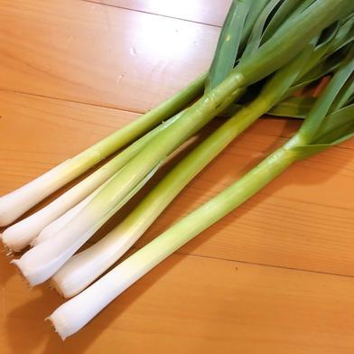 【春の恵み】自然栽培べっぴんやさいの葉にんにく(約1kg) 約1kg 野菜(にんにく) 通販