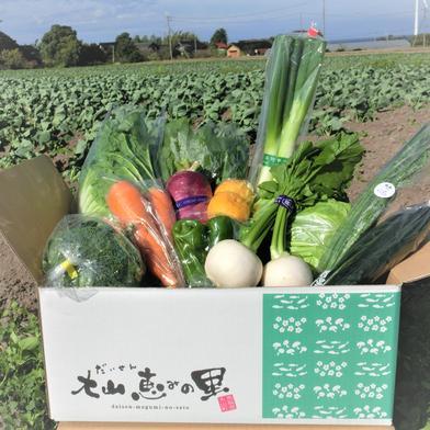 とっとり・だいせん 新鮮野菜直送便(おまかせセット) 10~13品目 鳥取県 通販