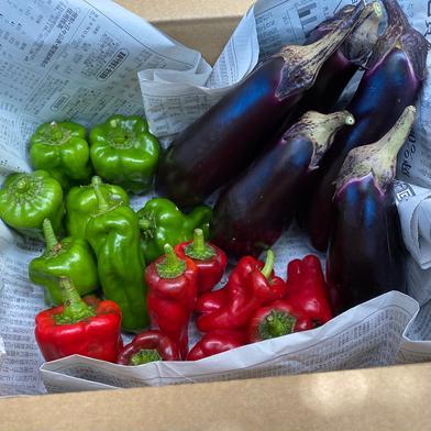 暑さに負けるな!鈴木清友農園夏野菜セット 1.8kg 神奈川県 通販