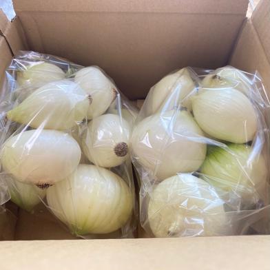 剥いてあって便利!甘い新玉箱込み5キロ(中玉、小玉50個〜55個) 箱込み5キロ 果物や野菜などの宅配食材通販産地直送アウル