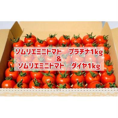 ソムリエミニトマト ダイヤ1kgとプラチナ1kgの食べ比べセット 各1kg 合計2kg 畑の宝石