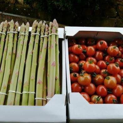 はなまる農園から春のたより、「アスパラ」と「ミニトマト」のセット アスパラ100g×6束、ミニトマト1kg 香川県 通販