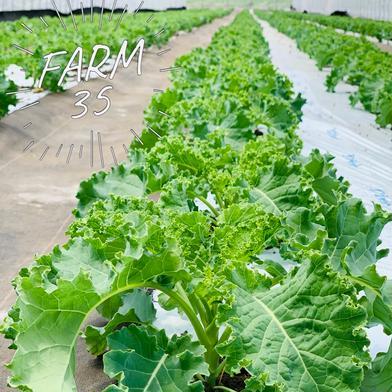野菜の王様サラダケール🥬 一袋100g×5袋 果物や野菜などの宅配食材通販産地直送アウル