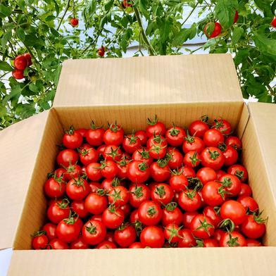 大きさおまかせフルーツトマト(フルティカ)3kg 3kg 千葉県 通販