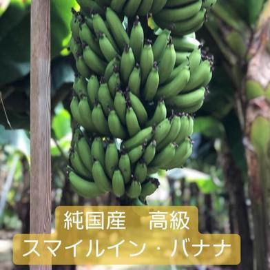 国産 高級スマイルイン・バナナ 1本 果物や野菜などの宅配食材通販産地直送アウル