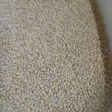 令和2年産もち麦500g×5袋 500g×5袋 食材ジャンル: 加工品 > その他加工品 通販