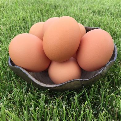 【枯草菌育ちの赤たまご75個】オレンジ色が鮮やか🎵濃厚な黄身🍳 75個(25個入り紙トレイで3段重ね)重量目安4.0-4.5kg 卵 通販