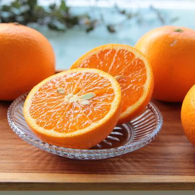 主井農園 清見オレンジ2k(お試し用) 2k 果物(柑橘類) 通販