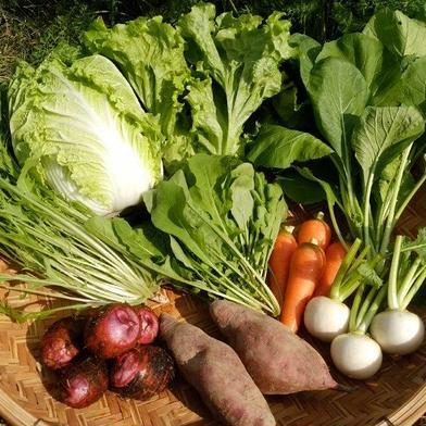 もり自然農園の旬野菜セット 【3~4人分】旬のお野菜約8種類の詰め合わせ 愛媛県 通販