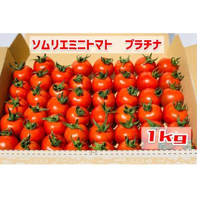 【希少な高濃度フルーツトマト】ソムリエミニトマト プラチナ1kg 1kg 畑の宝石