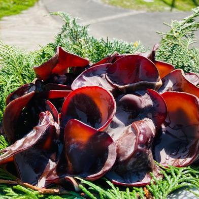 高知県産 生黒きくらげ 1kg 1kg 果物や野菜などの宅配食材通販産地直送アウル