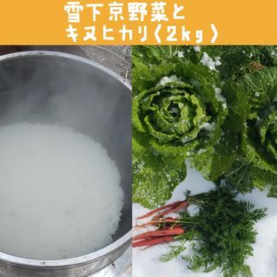 里山雪下京野菜とキヌヒカリ(2キロ)のセット! 100サイズ  京都府 通販