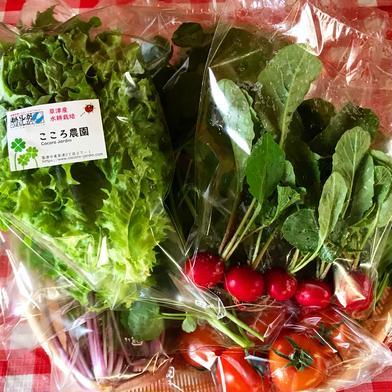 こころ農園おすすめ採りたて野菜セット 5〜6品 滋賀県 通販