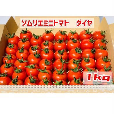 【塩トマトのようなフルーツトマト】ソムリエミニトマト ダイヤ1kg 1kg 熊本県 通販