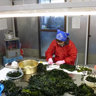 肉厚のお得な三陸わかめ2k 1Kg×2 魚介類(海藻) 通販