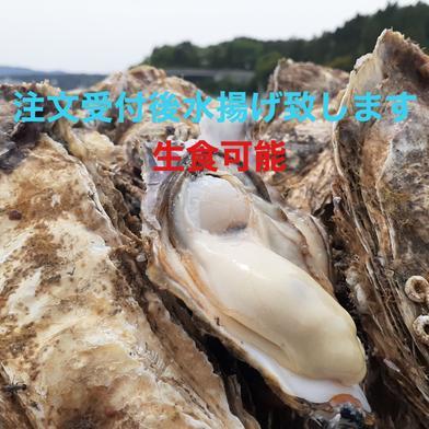 ラムサール条約湿地志津川湾より漁師直送!注文受け付け後水揚げ! 真牡蠣4kg 生食可! 送料込み 真牡蠣4kg(kg/6~9個) 宮城県 通販