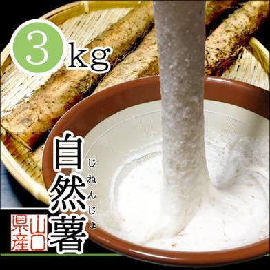 山口県岩国市産 自然薯 3kg 3kg 山口県 通販