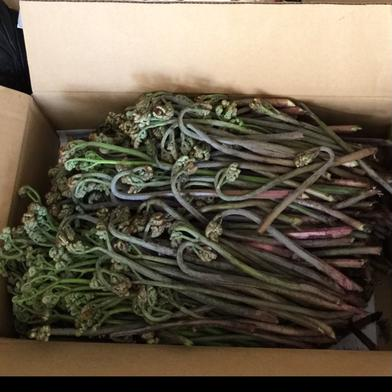 鳥海山の天然 山ワラビ 1,000グラム 2キロ以内 果物や野菜などの宅配食材通販産地直送アウル