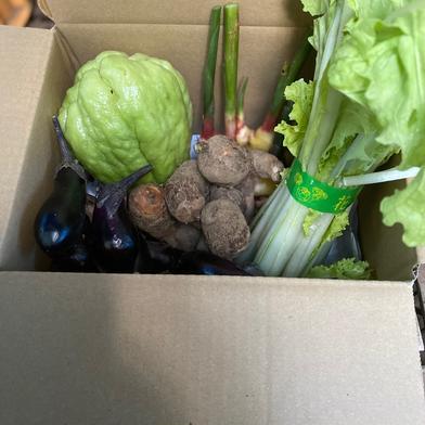 鈴木清友農園 秋の野菜詰め合わせ60 1.5kg 神奈川県 通販