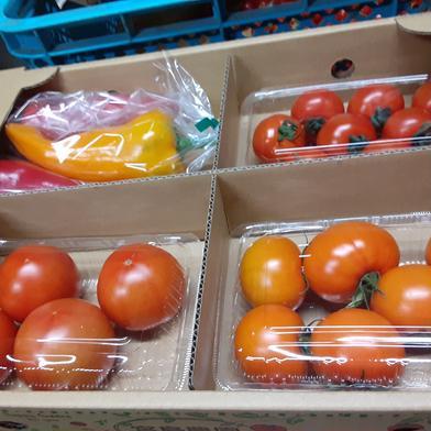 宮島農園🍅クワトロポルテ 1.5kg 野菜(トマト) 通販