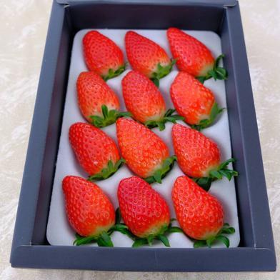 特選!朝採り苺 9粒から15粒(約400g) 果物(いちご) 通販