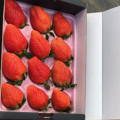 🔶特選・大粒🔶群馬県産『やよいひめ』12粒 12粒 果物(いちご) 通販