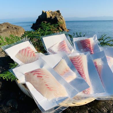 獅子島産真鯛(養殖)お刺身用 8パック 8パック(約500g) 魚介類(その他魚介) 通販