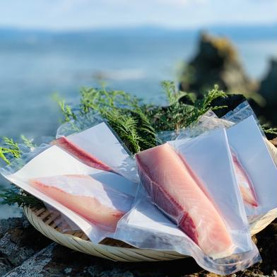 【訳あり】獅子島産ブリ 刺身(背中) 5パック ブリ刺身5パック(450g程度) 魚介類(ぶり) 通販