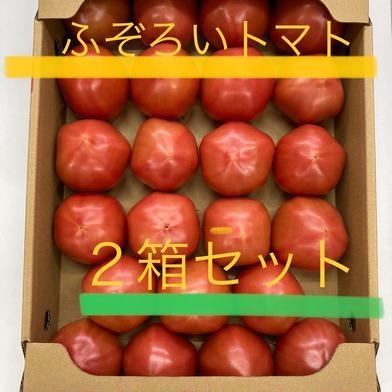 2箱セット!ふぞろいトマト(4kg×2) お友達やご親戚と! 山口秋穂トマト(4kg箱満杯) 2箱セット 野菜(トマト) 通販