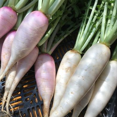 飲食店・大根好き必見‼️葉付き大根ミックス2kg🥗 2kg 千葉県 通販