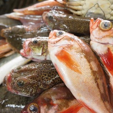 朝どれ氷見産鮮魚の詰め合わせ 魚種による 魚介類(セット・詰め合わせ) 通販