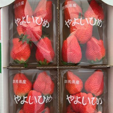 【SALE】大粒♡群馬県産『やよいひめ』300g×4パック入り 300g×4パック 果物(いちご) 通販