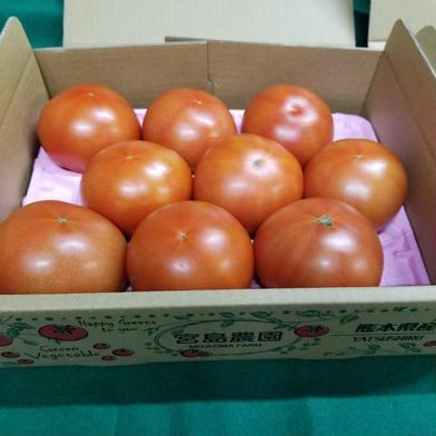 宮島農園ぜいたくトマト 1.2kg 野菜(トマト) 通販