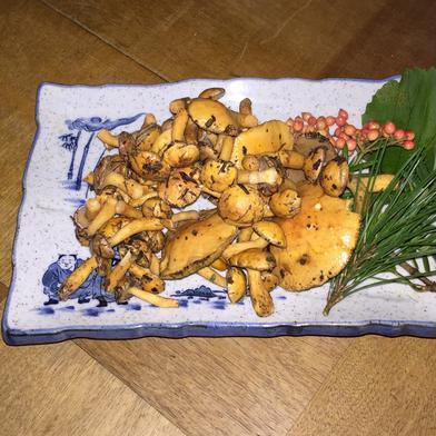 にかほ市象潟町産の天然アミタケの水煮袋詰め 500グラム 秋田県 通販